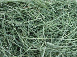 timothy-hay